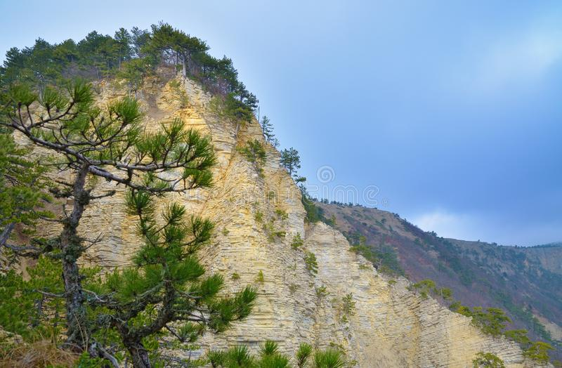 Landscape with layered cliff and pine trees stock photos