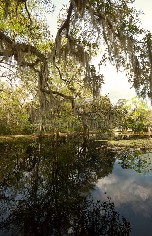 A landscape of live oaks, cypress trees, Spanish moss and reflections in a calm pond. stock photography
