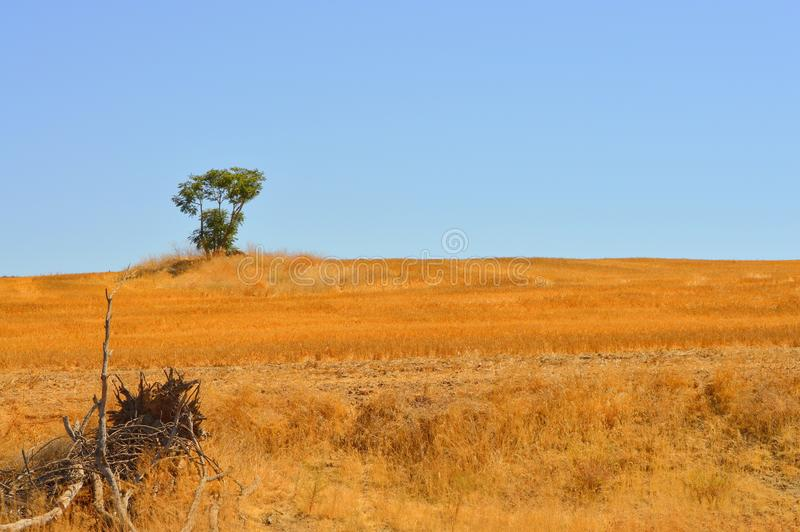 Landscape with lone tree on horizon royalty free stock image