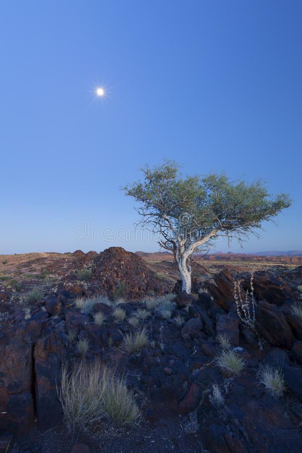 Landscape of a lone tree with white trunk and moon in dry desert. Landscape of a lone tree with white trunk and moon in the dry desert royalty free stock photos