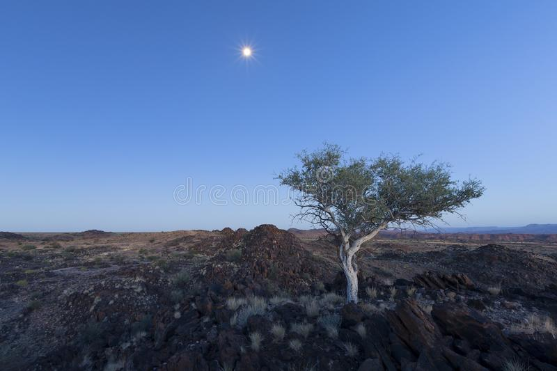Landscape of a lone tree with white trunk and moon in dry desert. Landscape of a lone tree with white trunk and moon in the dry desert stock image