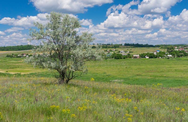 Landscape with lonely silverberry tree on a hill near Novo-Aleksandrivka village, central Ukraine. June landscape with lonely silverberry tree on a hill near stock image