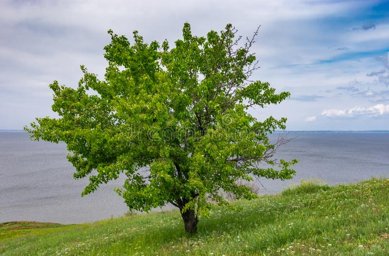 Landscape with lonely wild pear on a hilly Kakhovka Reservoir riverside located on the Dnipro River. Spring landscape with lonely wild pear on a hilly Kakhovka royalty free stock photography