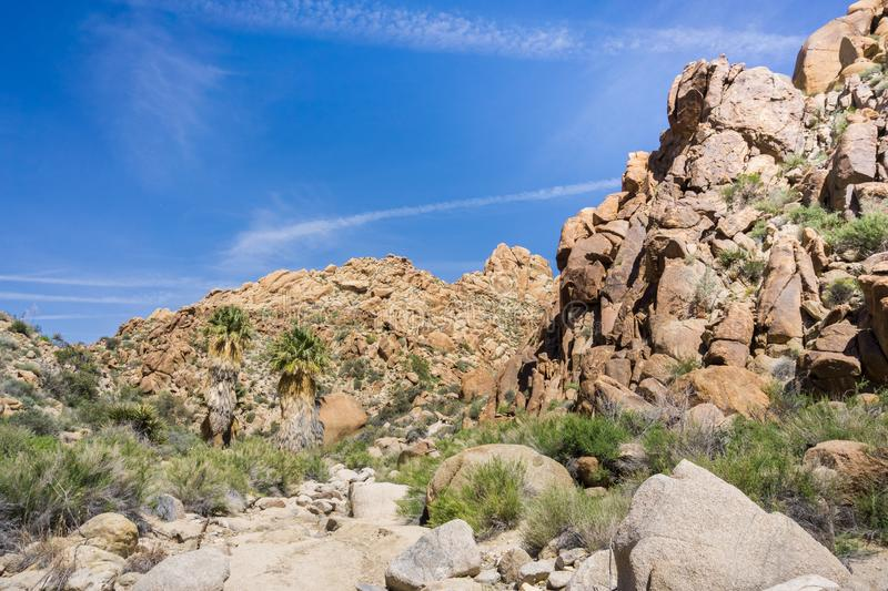 Landscape in the Lost Palms Oasis canyon, a popular hiking spot, Joshua Tree National Park, California royalty free stock photography