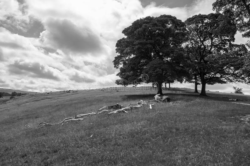 Landscape in Lyme Park estate in black and white. Landscape in Lyme Park estate in monochrome. The estate is managed by the National Trust and consists of a stock photography