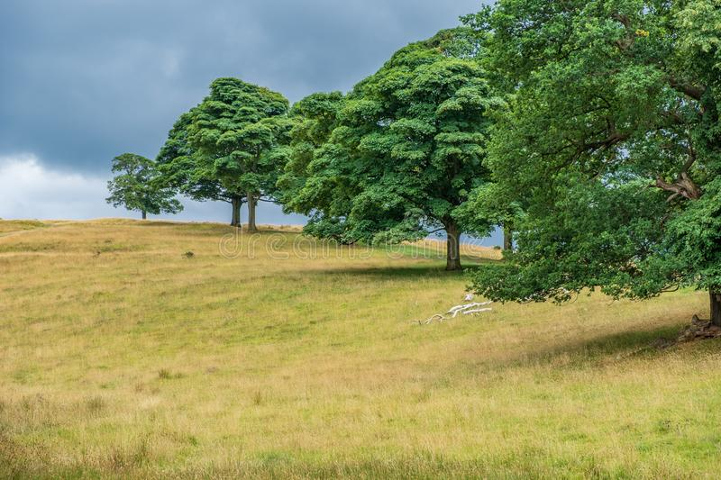 Beautiful Landscape in Lyme Park estate. Landscape in Lyme Park estate. The estate is managed by the National Trust and consists of a mansion house surrounded by royalty free stock photography
