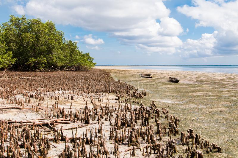 Landscape of Mafia Island at low tide with the mangrove. Uncovered and a cloudy blue sky stock photo