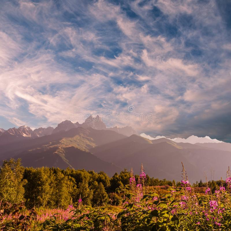 Landscape with majestic mountains and flowers stock photo