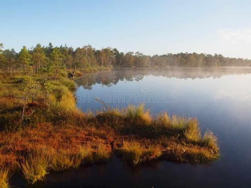 landscape marshen royaltyfria foton