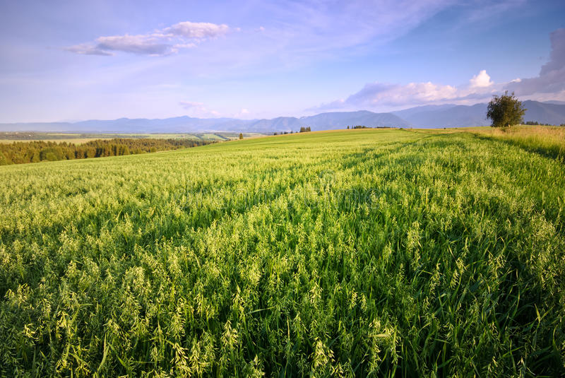 Landscape - meadow stock photos