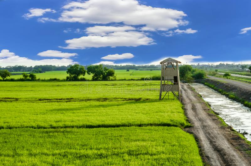 Landscape Meadow and rice field cloudy sky in countryside Thailand.  royalty free stock photo