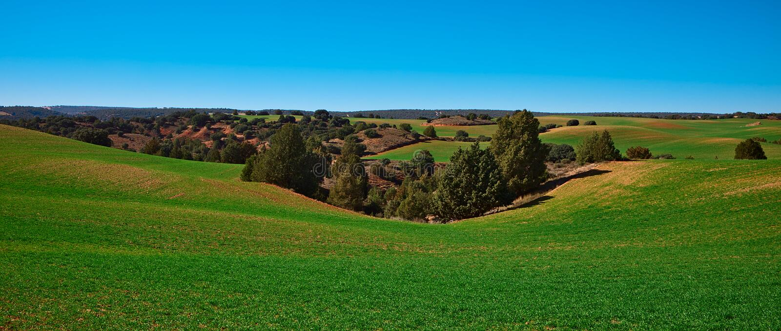 Landscape of meadows and trees on a sunny day royalty free stock images