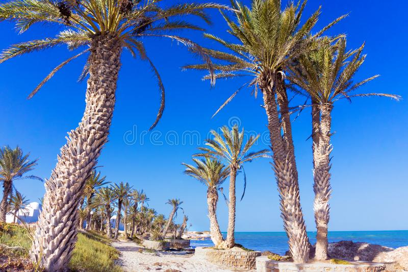 Landscape of the Mediterranean Sea in the Coastal Area of Djerba in Tunisia. Landscape of the Mediterranean Sea with Palm Trees in the Coastal Area of Djerba in royalty free stock photo