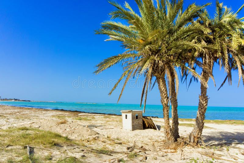 Landscape of the Mediterranean Sea with Palm Trees in Djerba, Tunisia. Beautiful landscape of the Mediterranean sea with palm trees in Djerba, Tunisia royalty free stock photography