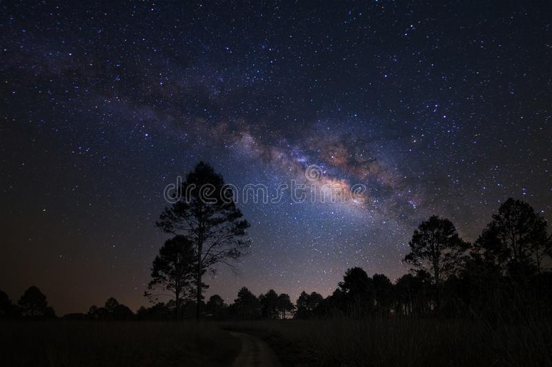 Landscape with milky way galaxy, Night sky with stars and silhouette of pine tree royalty free stock photo