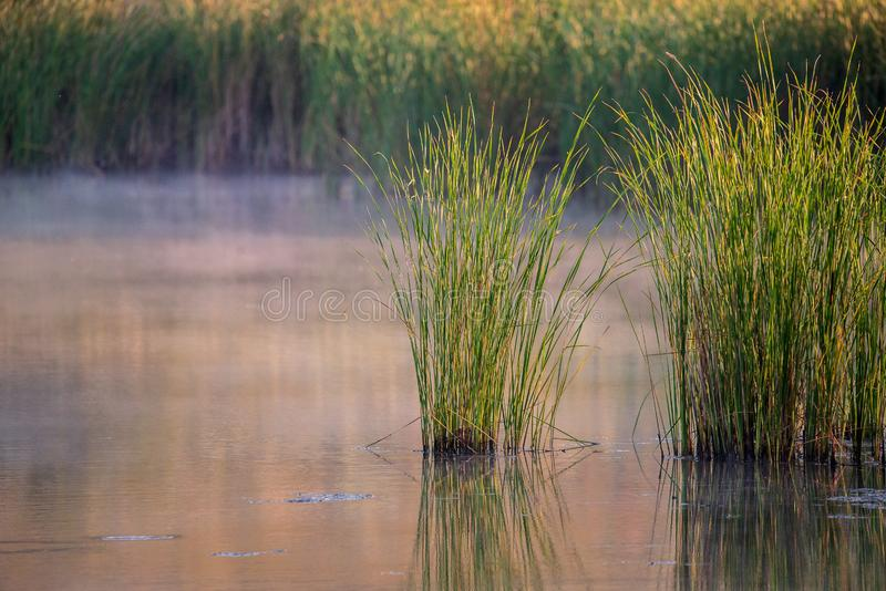 Landscape with misty morning on lake or pond. Nature, park, environment, fog, haze, smoke, outdoor, river, spring, sunlight, sunrise, tranquil, sky, water stock image