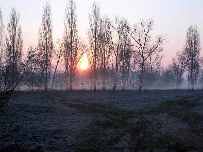 Sunrise over the trees in the park in hoarfrost. Trees in the morning haze. Empty park benches. Landscape of morning fog in the bare dark forest. Empty royalty free stock photos