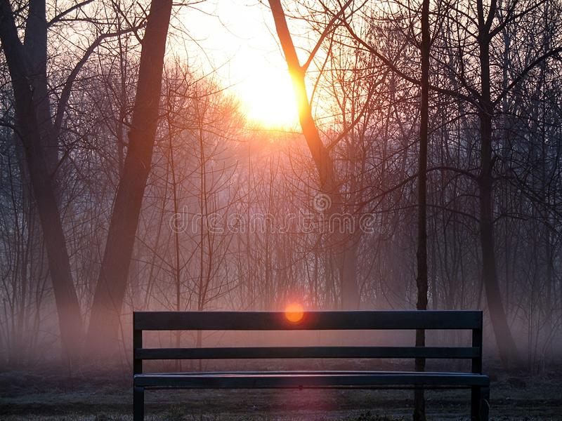 Sunrise over the trees in the park. Trees in the morning haze. Empty park bench. Landscape of morning fog in the bare dark forest stock photography