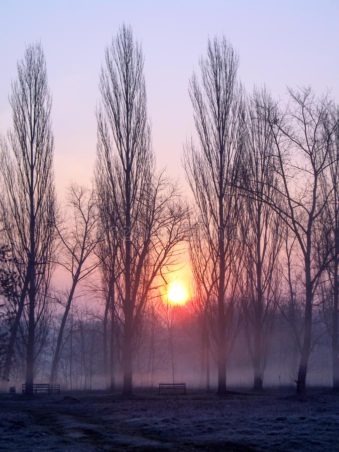 Sunrise over the trees in the park. Trees in the morning haze. Empty park benches. Landscape of morning fog in the bare dark forest royalty free stock images