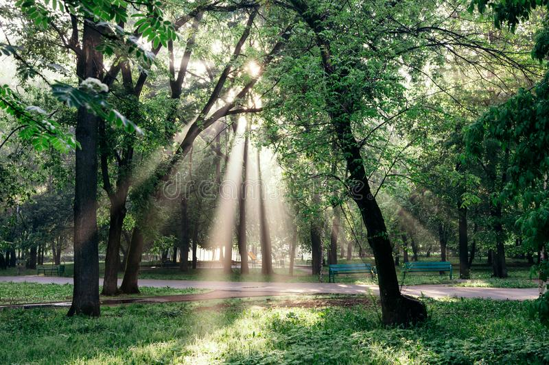 A landscape with a morning park and sun rays making their way through clouds and leaves in the trees. Summer, dawn royalty free stock image