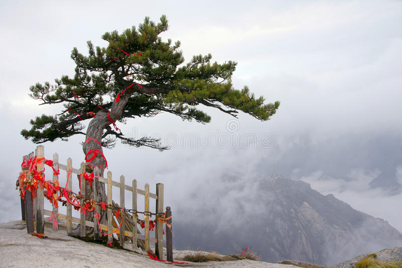 Landscape of Mount Hua. The alone pine tree on the top of Mount Hua(Huashan). This mountain is one of the most perilous tourist attractions in china. Huashan is stock photos