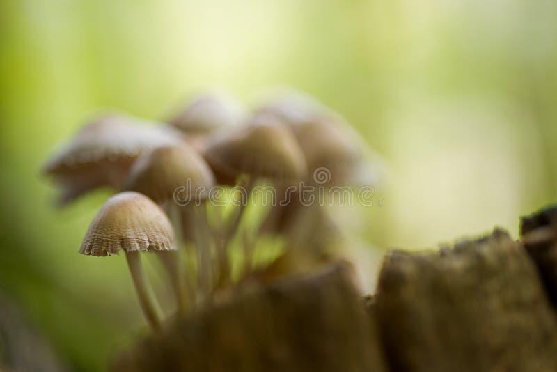 Landscape with mushrooms. Creative autumn landscape with mushrooms stock photo