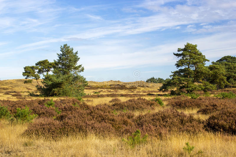 Landscape in National Park Hoge Veluwe in the Netherlands. stock photography