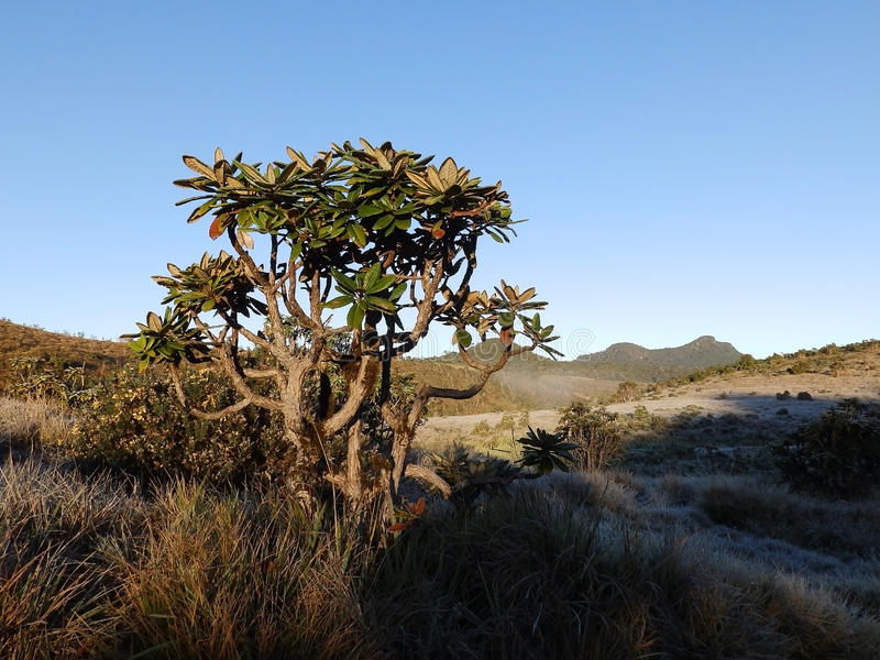 Landscape in the National Park Horton Plains. Sri stock photo