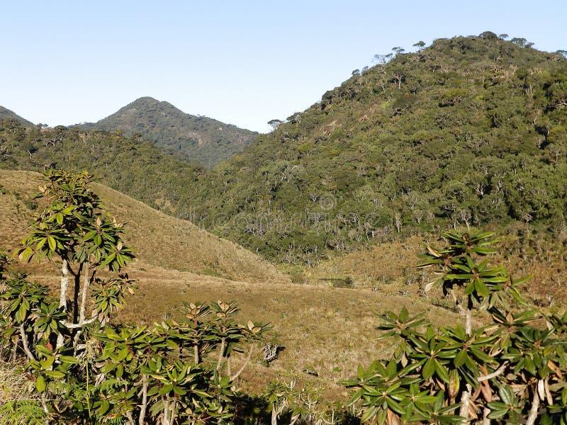 Landscape in the National Park Horton Plains. Sri royalty free stock photography