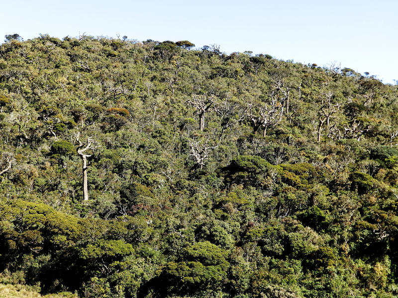 Landscape in the National Park Horton Plains, Sri Lanka stock image