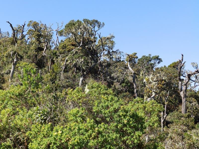 Landscape in the National Park Horton Plains, Sri Lanka royalty free stock photography