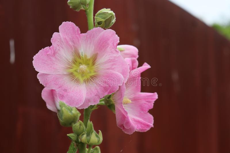 Landscape natural wildflowers flower pink village royalty free stock images