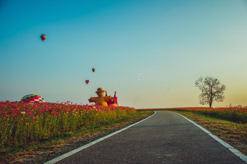 Landscape nature background of beautiful cosmos flowers field and hot air balloon on blue sky stock photography