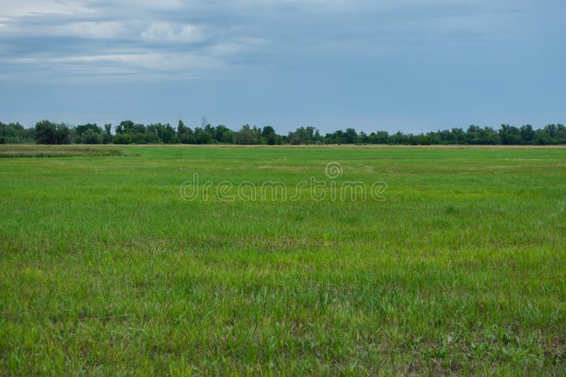 Landscape Nature. Big green field, forest and cloudy sky. View in rainy day royalty free stock photo