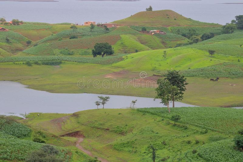 Landscape in nature, mahi back water, banswara, rajasthan, India. Green trees, green small hill, water of river, green field, rural house, trail and artistic stock photos