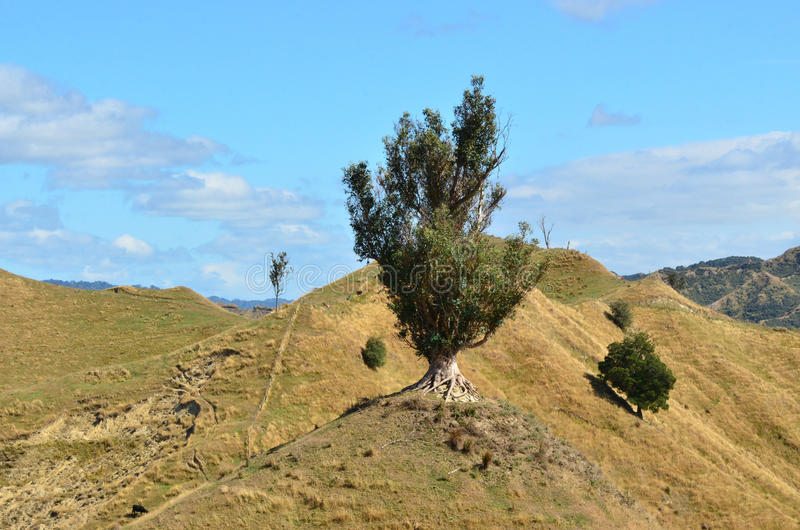 New Zealand Landscape royalty free stock photography