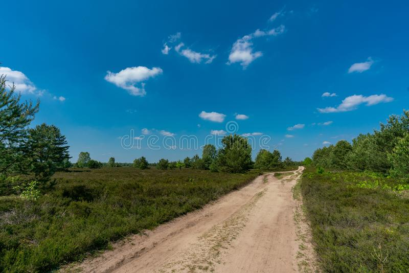 Landscape of a nature reserve with heather erica plants and birches stock photos