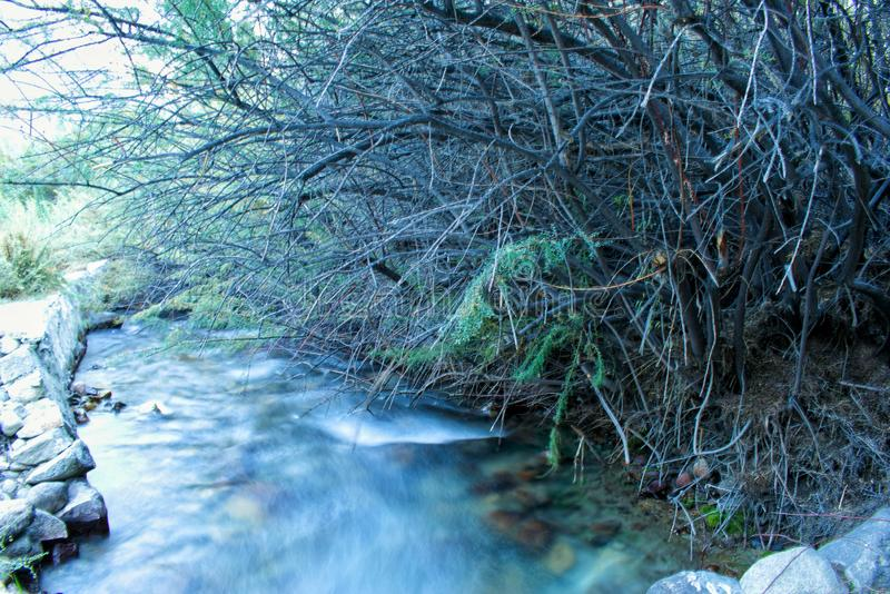 Landscape and nature. Smooth running stream of hills under bushes royalty free stock photography