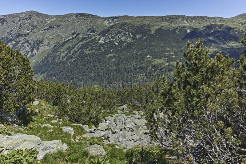 Landscape near The Fish Lakes Ribni Ezera, Rila mountain. Bulgaria royalty free stock photos