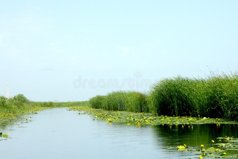 Landscape and nice yellow water lilies in Danube Delta channel stock photography