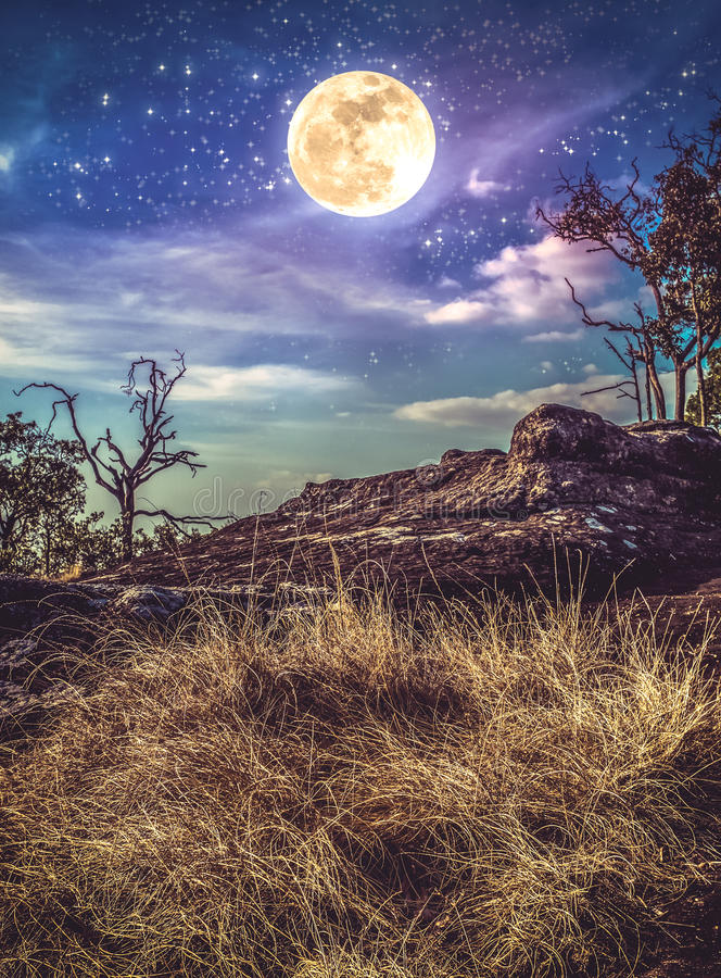 Landscape of night sky with many stars above wilderness. Vintage. Landscape of night sky with many stars above wilderness. Beautiful bright supermoon, serenity royalty free stock photography