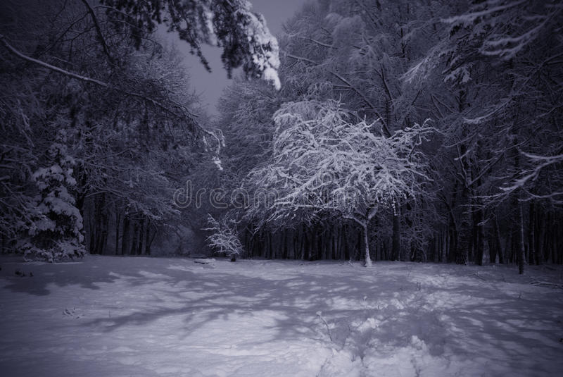 landscape night winter στοκ εικόνα