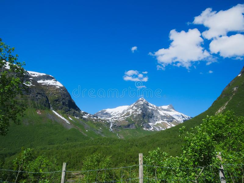Landscape in Norway with fence, green trees, mountain with snow and blue sky. Landscape in Norway with nearby fence, green trees, mountain with snow and blue sky royalty free stock image