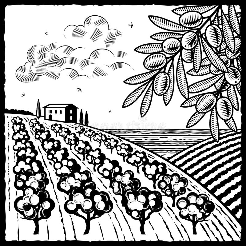 Landscape with olive grove black and white. Retro landscape with olive grove in woodcut style. Black and white illustration with clipping mask stock illustration