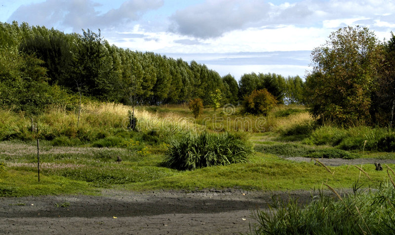 Landscape of Oregon wetlands royalty free stock photography