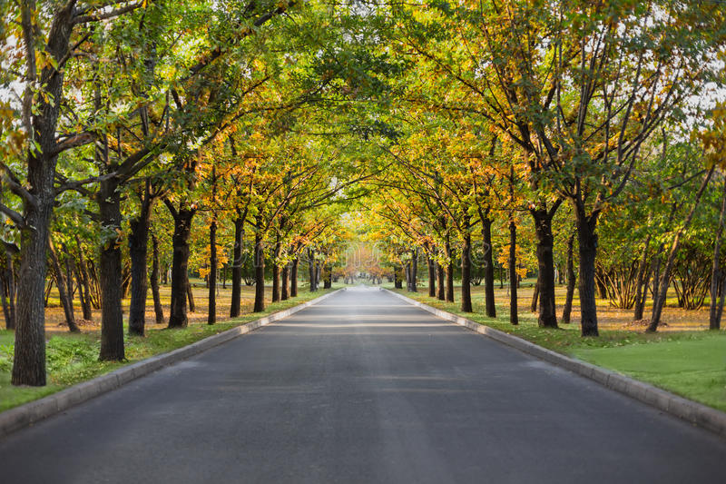 Landscape park allee nature. Autumn landscape park allee nature royalty free stock image