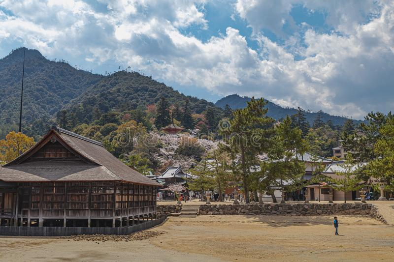 Landscape photo of the beach on Miyajima Island, Japan with Cherry blossoms. A closer view of the beach on Miyajima Island, Japan next to the shinto shrine royalty free stock image