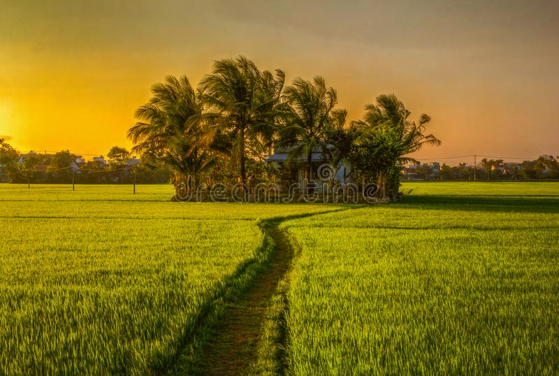 Landscape photo of beautiful. In Phu Yen province, vietnam, simple house is between rice fields in the afternoon royalty free stock image