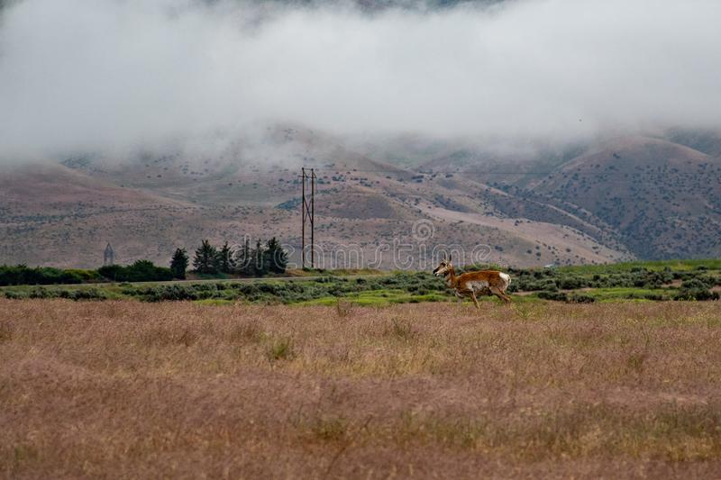 Landscape Photo of Brown Deer on Field royalty free stock photography