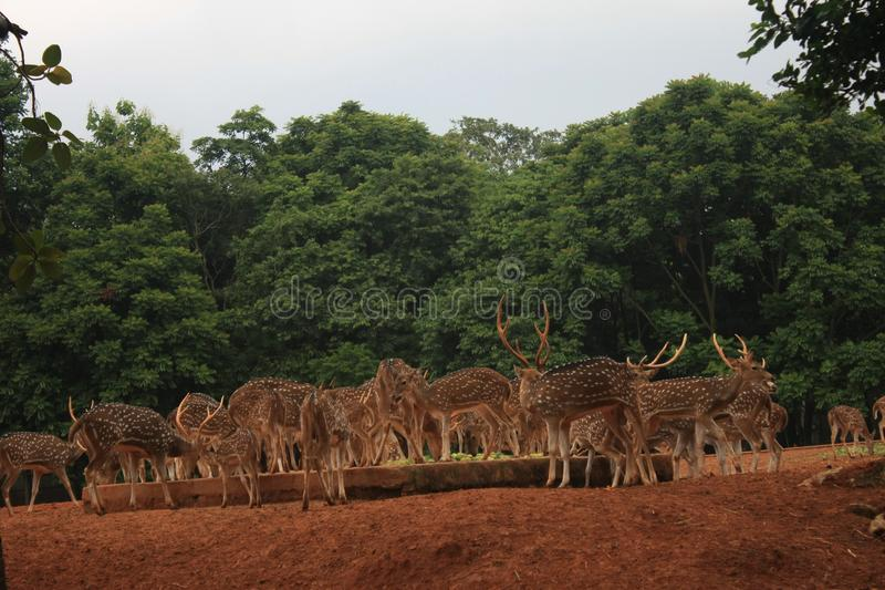 Landscape Photo with Deer. It`s a Landscape Photo with Deer. It`s a nice wild animal stock image